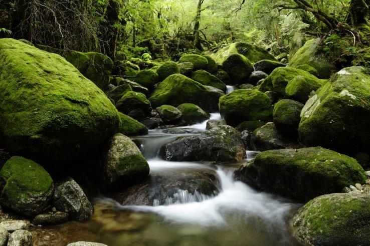 Der Yakushima Wald Ghibli