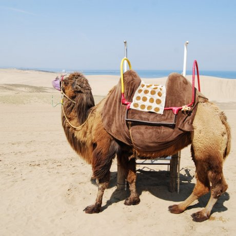 Tottori Sand Dune Views