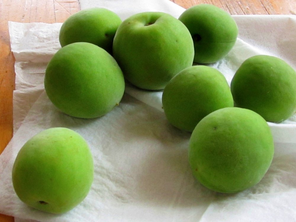 Green plums collected for making Umeshu