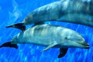 海豚游个痛快