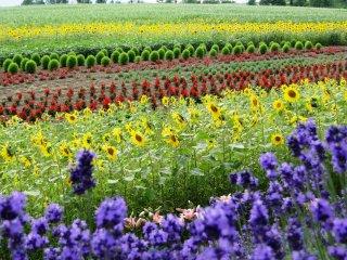 Bunga-bunga dalam berbagai warna di Bukit Zerubu