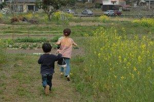 Chạy quanh những cánh đồng vàng