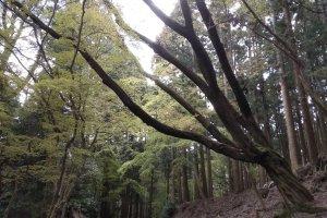 Kasuga Primeval Forest