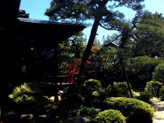 Lounge on the veranda in the shade of the pine tree