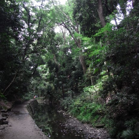 Todoroki Valley in Setagaya Ward