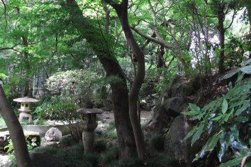 Todoroki-Valley