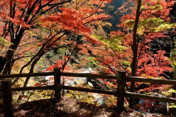 Autumn Colors at Shosenkyo Gorge