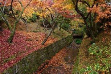 东福寺之让人震撼的红叶