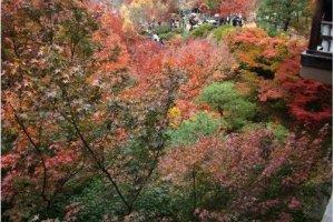 通天桥上看红叶