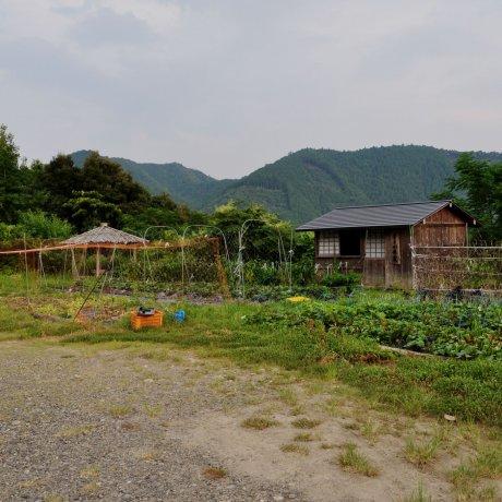 "Яичная ферма ""Кумано Дэаи-но-сато"""