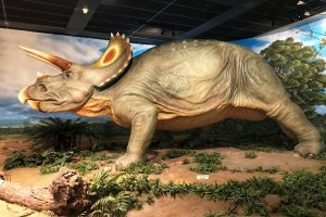 The triceratops - my child's favorite!