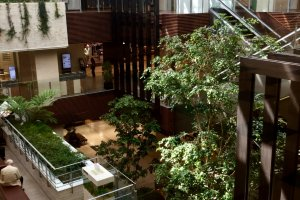 Light and greenery in the atrium