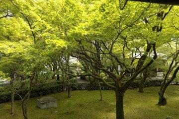 Kyoto's Temple of Genuine Paradise