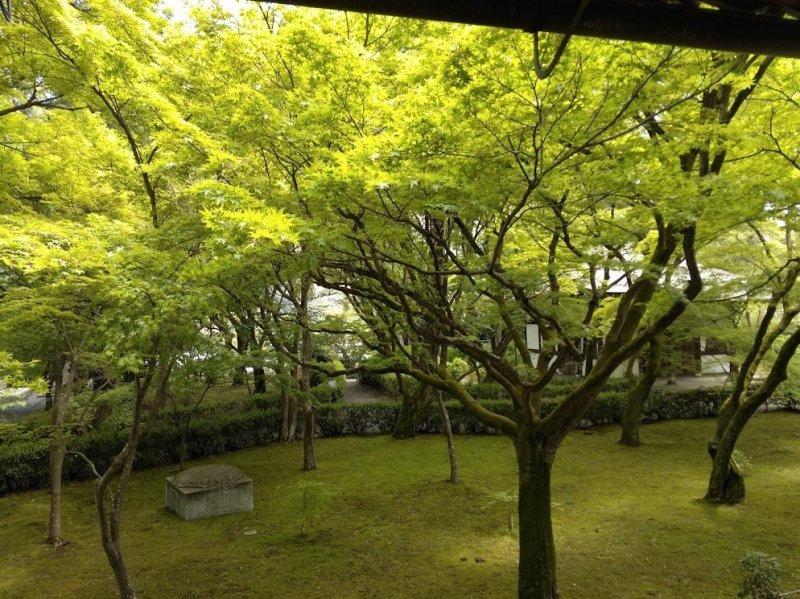 Shinnyodo Zen Zone
