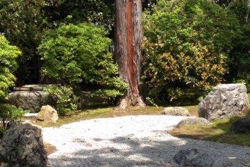 A real zen garden