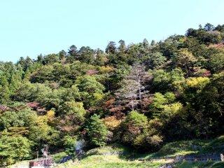 Nature in Naruko