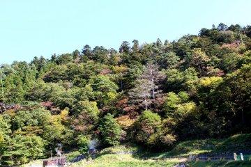 A Trip to Naruko