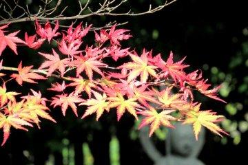 Rinnoji Temple Garden