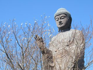 Amida Buddha and autumn sakura is a miracle!
