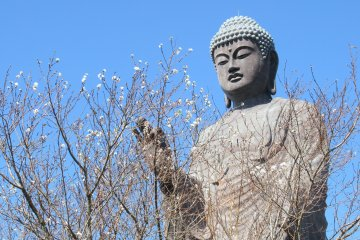The Miracle of Amida Buddha