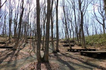 Senganishi Forest Park campground