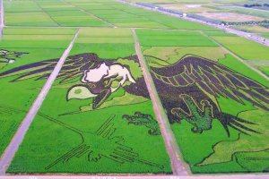 """The 2018 display """"Great wings and Nazca Lines"""""""