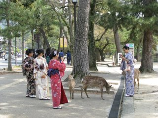 I enjoyed the sight of girls in yukata and deer