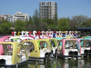 Swan boats waiting to be ridden in Shinobazu Pond, Ueno Park