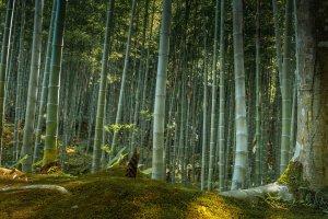 100 Soundscapes of Japan
