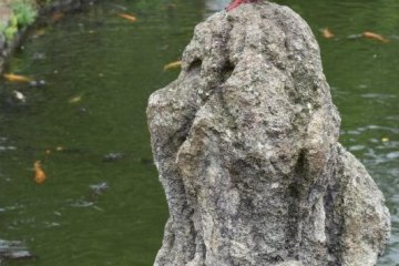 A pigeon keeps a watchful eye on the koi