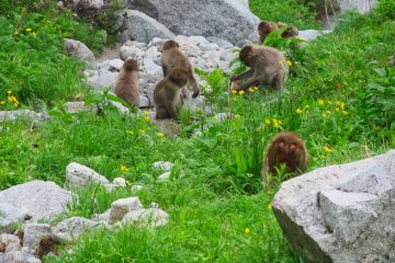 There are large groups of monkeys