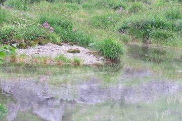 Kengaike Pond reflection