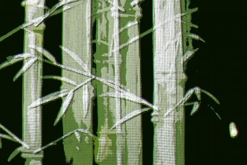 A bamboo image with filters