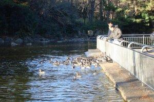 Feeding ducks in the duck pond.