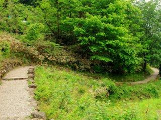 Lối mòn dẫn sâu vào rừng