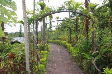 <p>There&#39;s a variety of paths and walkways to explore; this one is growing into an archway, slowly</p>