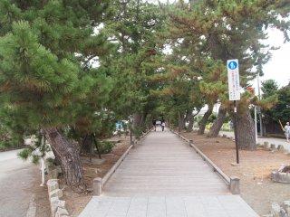 「羽衣の松」から9世紀の創建とされる御穂神社に至るまで、「神の道」と呼ばれる松並木が連続している。