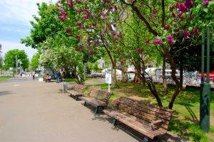 Odori Park has around 400 lilac trees to enjoy!