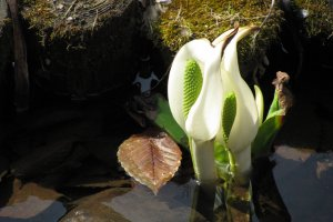 Early spring flowers in a brook