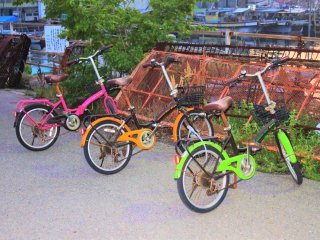 Bicycles available for rental