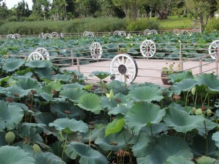 Aquatic plants cover the ponds of the Water Garden at Southeast Botanical Gardens