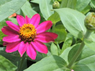 A cute flower