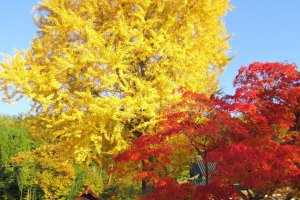 Autumn in Ikeda Town