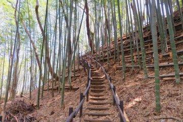 Kozukue Castle has many steps; Good exercise!