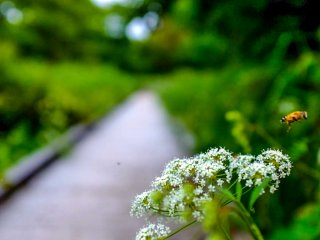As with the dense population of plant and bird life, the wooden path is also a fantastic place to observe insects