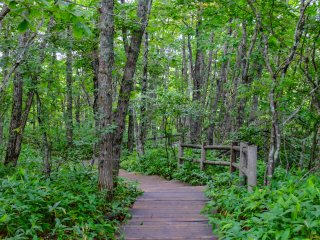 The car park entrance features a nice walk through the thick forest before entering the wetland walkway