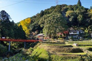Nagaretani Hachiman Shrine and the Giant Ginko