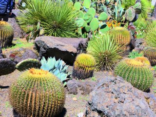 The Mexican cacti section
