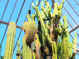 The South American cacti section