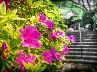 As I approached one of the first buildings on the left, some colorful azaleas awaited